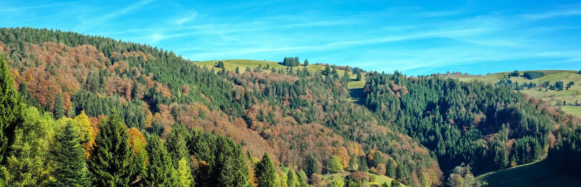 Schwarzwald Landschaft - Natur pur