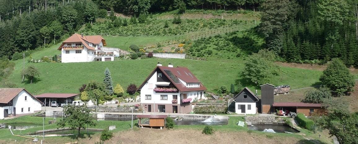 Schwarzwald Forellen